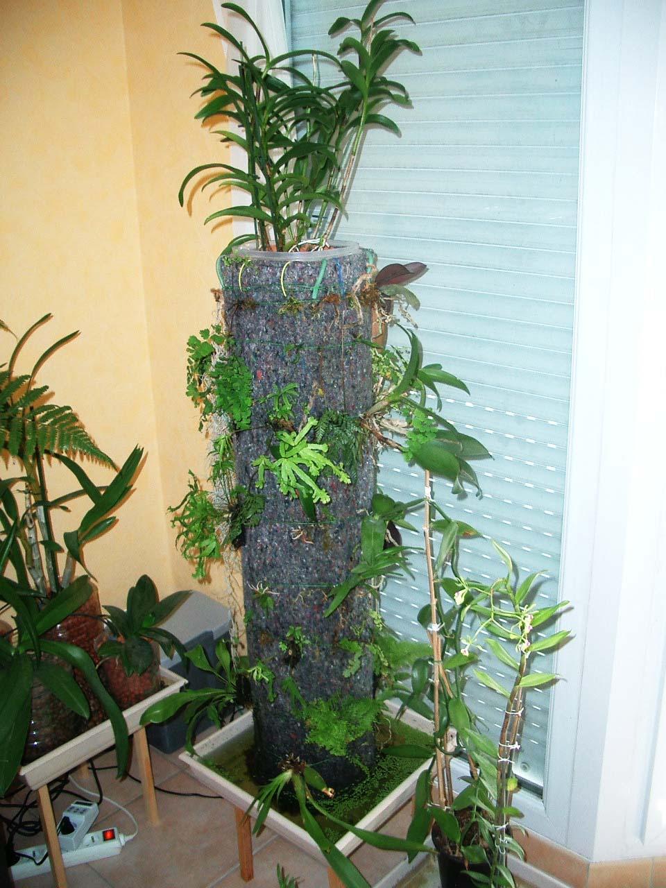 differents murs a epiphytes. Black Bedroom Furniture Sets. Home Design Ideas