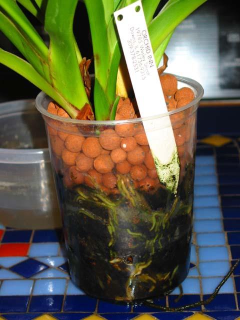 les orchidees et l hydroculture la suite